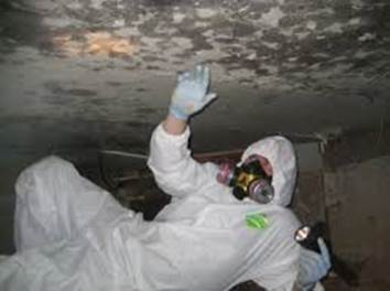 crawl space closet mold removal and remediation services being carried out in 18924
